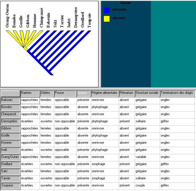 logiciel phylogene